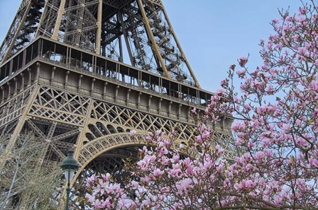 Eiffel Tower with Pink Magnolia by Cora Niele art print
