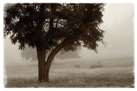 Calm Mist no Limb by Debra Van Swearingen art print