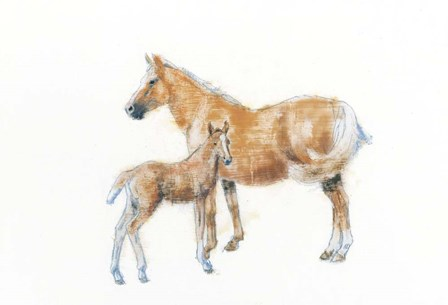 Horse and Colt by Emily Adams art print
