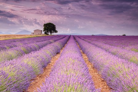 Stone House in Lavender Field by Michael Blanchette Photography art print