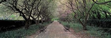 Through Conservatory Garden, Central Park, NYC by Richard Berenholtz art print