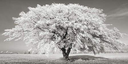 Lime Tree with Frost, Bavaria, Germany by Frank Krahmer art print