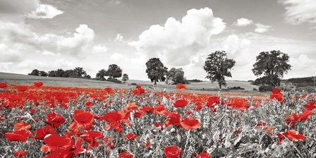 Poppies and Vicias in Meadow, Mecklenburg Lake District, Germany by Frank Krahmer art print