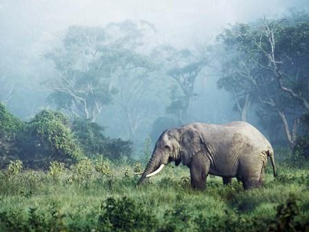 African Elephant, Ngorongoro Crater, Tanzania by Frank Krahmer art print
