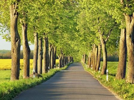 Lime Tree Alley, Mecklenburg Lake District, Germany 1 by Frank Krahmer art print