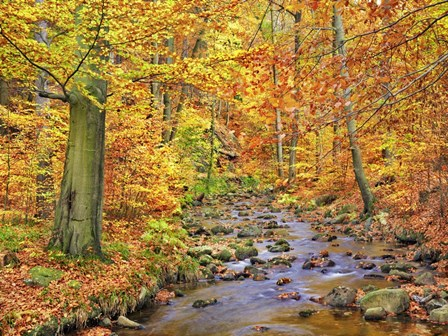 Beech Forest In Autumn, Ilse Valley, Germany by Frank Krahmer art print