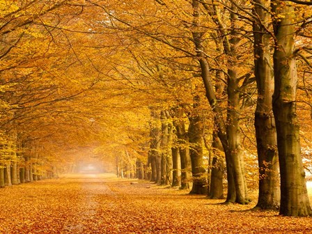 Woods in Autumn by Pangea Images art print