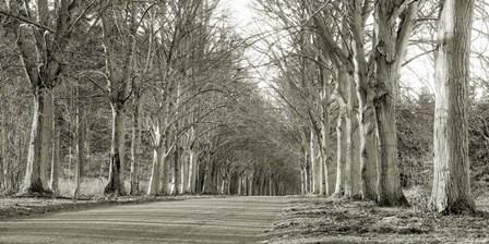 Tree Lined Road, Norfolk, UK art print