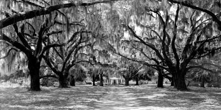 Avenue of Oaks, South Carolina art print