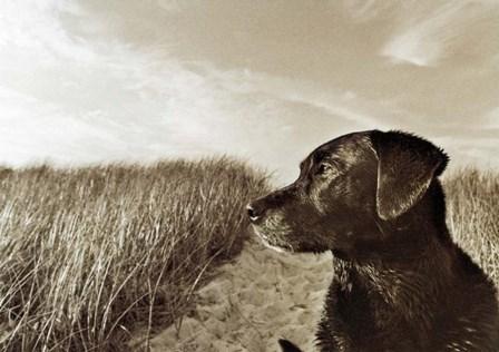 At the Beach by Jim Dratfield art print