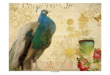 Postcard Peacock by Kimberly Allen art print