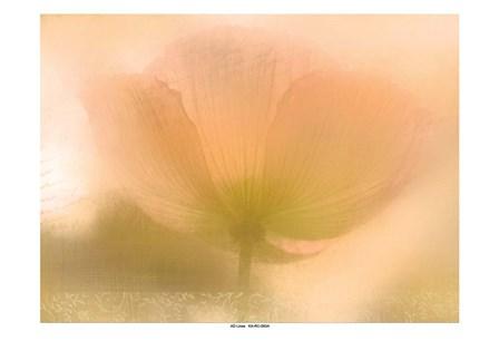 Golden Poppy by Kimberly Allen art print
