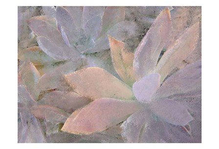 Succulents by Kimberly Allen art print