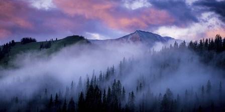 Evergreens Fog by Dan Ballard art print