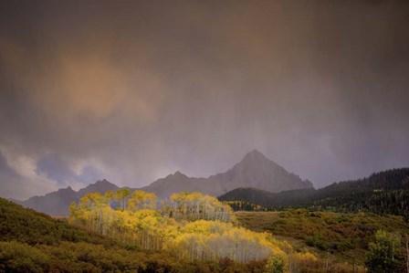 Mountain Aspens by Dan Ballard art print