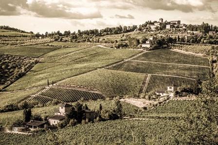 Tuscany Vineyard by Dan Ballard art print