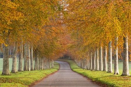 Autumn Trees by Adam Burton art print