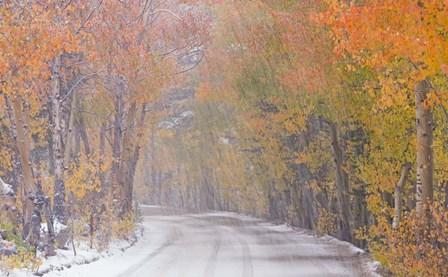 Snowy Road by Adam Burton art print