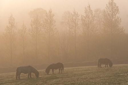 Grazing Ponies by Adam Burton art print