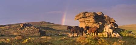 Rainbow by Adam Burton art print