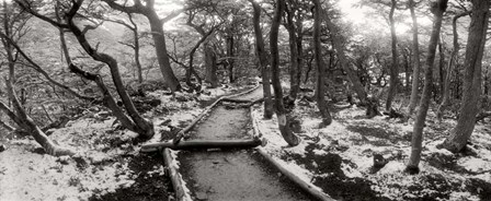 View of a trail through the trees of Tierra del Fuego National Park, Patagonia, Argentina by Panoramic Images art print