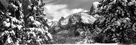 Snowy trees in winter, Yosemite Valley, Yosemite National Park, California by Panoramic Images art print