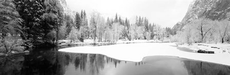 Snow covered trees in a forest, Yosemite National Park, California by Panoramic Images art print