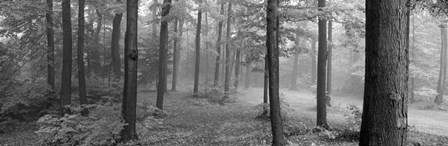 Chestnut Ridge Park, Orchard Park, NY by Panoramic Images art print
