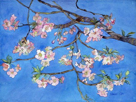 Cherry Blossoms by Sharon Pitts art print