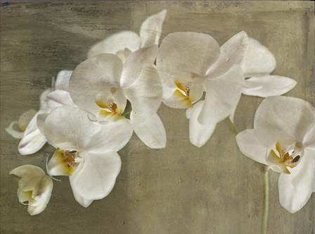 Painted Orchid by Symposium Design art print