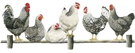 Hens, White Background by Janet Pidoux art print