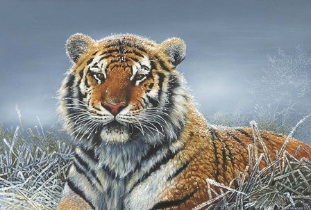 Tiger In Snow by Harro Maass art print