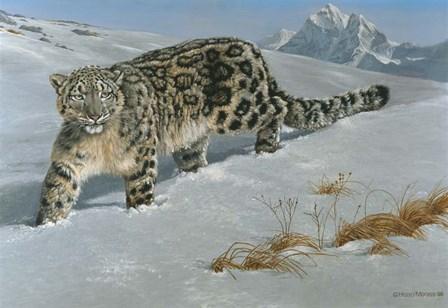 Snow Leopard by Harro Maass art print