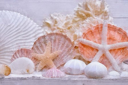 Shell Still Life by Cora Niele art print