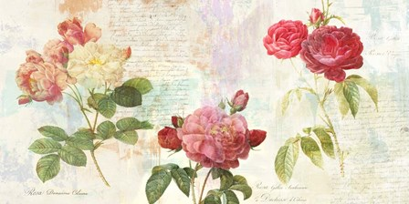 Redoute's Roses 2.0 by Eric Chestier art print