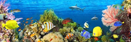 Life in the Coral Reef, Maldives by Pangea Images art print