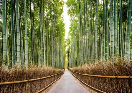 Bamboo Forest, Kyoto, Japan by Pangea Images art print