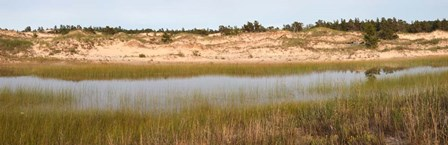 Sand Dunes and Marsh, Michigan by Panoramic Images art print