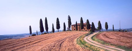 Trees on a Hill, Tuscany, Italy by Panoramic Images art print