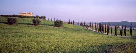 Tree Line, Tuscany, Italy by Panoramic Images art print