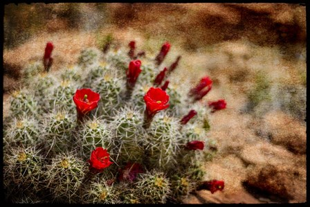 Desert Flower 3 by LightBoxJournal art print