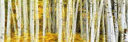 Double Xxposure Aspen Grove, Grand Teton National Park, Wyoming by Panoramic Images art print