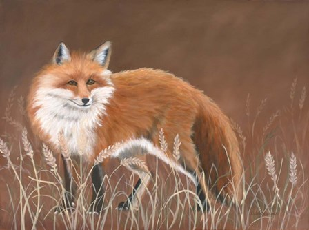 Red Fox by Julie Peterson art print