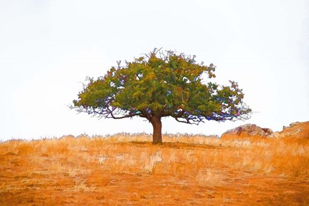 Lone Tree by Ramona Murdock art print