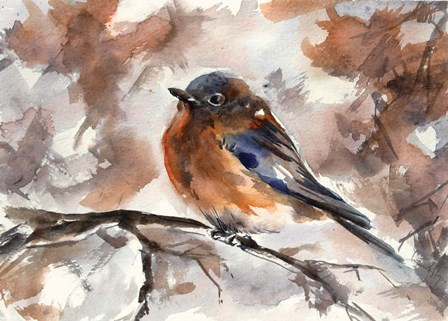Robin on Branch by Sophia Rodionov art print