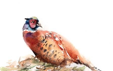 Pheasant by Sophia Rodionov art print