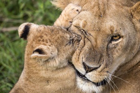 Mother Love by Alessandro Catta art print