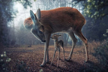Mother And Fawn by John Wilhelm art print