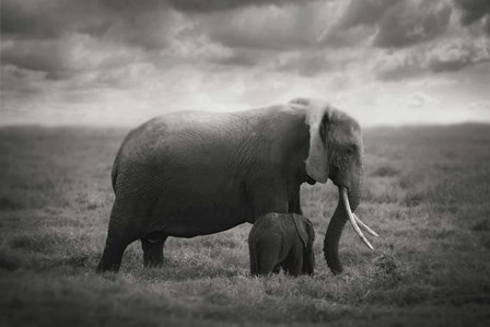 Mother's Love by Bjorn Persson art print