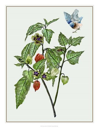 Cape Gooseberry I by Melissa Wang art print